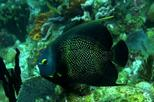 2-Tank Guided Scuba Diving in St Thomas