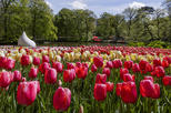 Amsterdam Shore Excursion: Keukenhof Gardens and Tulips Fields Tour