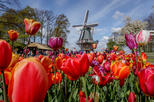 Amsterdam Super Saver: Rijksmuseum and Keukenhof Gardens from Amsterdam in One Day