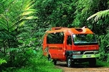 Daintree and Cape Tribulation 4WD Tour from Cairns, Cairns & the Tropical North, 4WD, ATV & ...