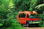 Daintree, Cape Tribulation and Mossman Gorge 4WD Tour from Cairns, Cairns & the Tropical North, ...