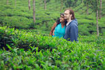 Bangladesh Discovery Tour Explore the Tea Gardens of Sreemangal