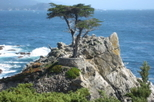 Monterey, Carmel and The 17-Mile Drive Day Trip