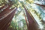 Muir Woods, Giant Redwoods and Sausalito Half-Day Trip, San Francisco, Day Trips