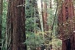 Winchester Mystery House, Muir Woods and Sausalito Day Trip, San Francisco, Bus & Minivan Tours