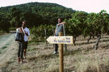Hiking Tour to Pic St Loup with Wine Tasting from Montpellier