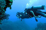 Dedicated Dives for Certified Divers from Puerto Vallarta, Puerto Vallarta, Scuba & Snorkelling