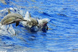 Dolphins or Turtles Guaranteed, Catamaran Morning or Afternoon Snorkel & Lunch