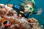 Outer Great Barrier Reef Dive and Snorkel Sailing Cruise from Cairns