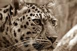 3-Day NON-SHARED Private Group Kruger Safari Camping Tour from Johannesburg