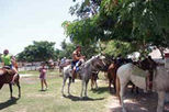 Horseback Riding from Cozumel