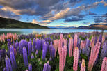 4 day great southern island circle tour from christchurch in christchurch 136407