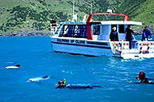 Akaroa Swim with Dolphins Tour from Christchurch, Christchurch,