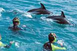Kaikoura Swim with Dolphins Tour from Christchurch, Christchurch,