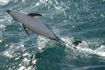Kaikoura Whale and Dolphin Overnight Tour from Christchurch, Christchurch,