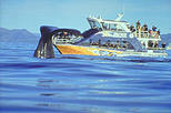 Kaikoura Whale Watch Day Tour from Christchurch, Christchurch,
