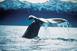 Kaikoura Whale Watch Tour from Christchurch including TranzCoastal Rail Journey, Christchurch, ...