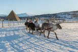 Reindeer Feeding, Sami Culture, and Short Reindeer Sledding Tour from Tromso