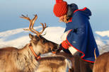 Reindeer Sledding, Feeding, and Sami Culture Tour from Tromso