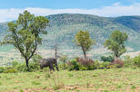 Full day pilanesburg nature reserve tour in johannesburg 334895
