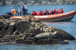 Sea Safari Tour from Vancouver