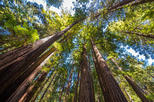 The Ultimate Day in the Bay-Includes Muir Woods