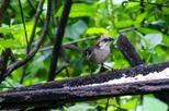 Birdwatching Tour in El Chorro waterfall and Yunguilla Jocotoco Reserve from Cuenca