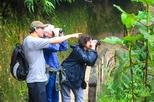 Birdwatching Tour in Tinajillas Forest area from Cuenca