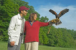 Beginners Falconry Experience