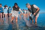 5-Day Monkey Mia Dolphins, Pinnacles Desert, Kalbarri and Ningaloo Reef Tour from Perth, Perth, ...