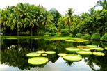 1 Day Xishuangbanna City Tour with Menglun Tropical Botanical Garden