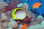 Glass Bottom Boat Cruise and Coral Reef Viewing, Sharm el Sheikh,