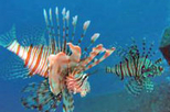Ras Mohamed Red Sea Cruise and Snorkeling, Sharm el Sheikh,