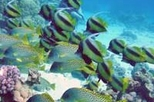 Tiran Island Cruise and Snorkeling, Sharm el Sheikh,