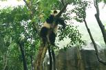 4-Hour Giant Panda Experience Private Tour With Morning Departure In Chengdu