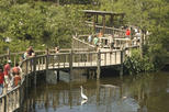 Gatorland with Transportation from Orlando with Optional Airboat Ride