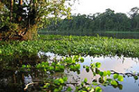 Tortuguero National Park, San Jose,