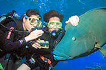 Great Barrier Reef Diving and Snorkeling Cruise from Cairns, Cairns & the Tropical North, Scuba ...