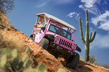Sonoran Desert Eco-Tour from Scottsdale