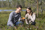 A Berry Nice Day - Berry Picking in Rovaniemi