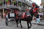 New Orleans French Quarter Carriage Tour