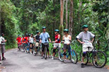 Blue Mountain Downhill Bike Tour with Transport from Ocho Rios