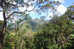 Oahu Volcanic Rainforest Hiking Adventure