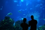 Sydney Sightseeing Pass: Aquarium, Sydney Tower Eye, Wild life Sydney and Sydney Harbour Cruise, ...