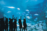 Sydney Sightseeing Pass - Aquarium, Sydney Tower, Wildlife World and Sydney Harbour Cruise
