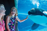 SeaWorld® San Diego, San Diego, Theme Park Tickets & Tours