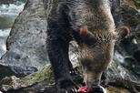 Grizzly Bears Of The Wild: A First Nations Wildlife Journey into the Great Bear Rainforest