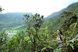 Oahu Mountain Rainforest Small Group Adventure