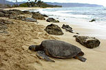 Oahu North Shore Adventure Half-Day Tour, Oahu, Half-day Tours