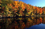 Gatineau Park Fall Foliage Tour